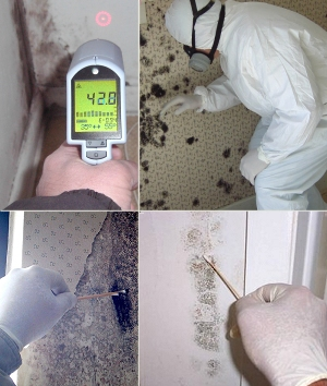 Certified Residential Mold Inspection Course