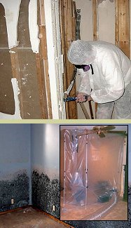 Mold Remediation Training from PMII | Professional Mold